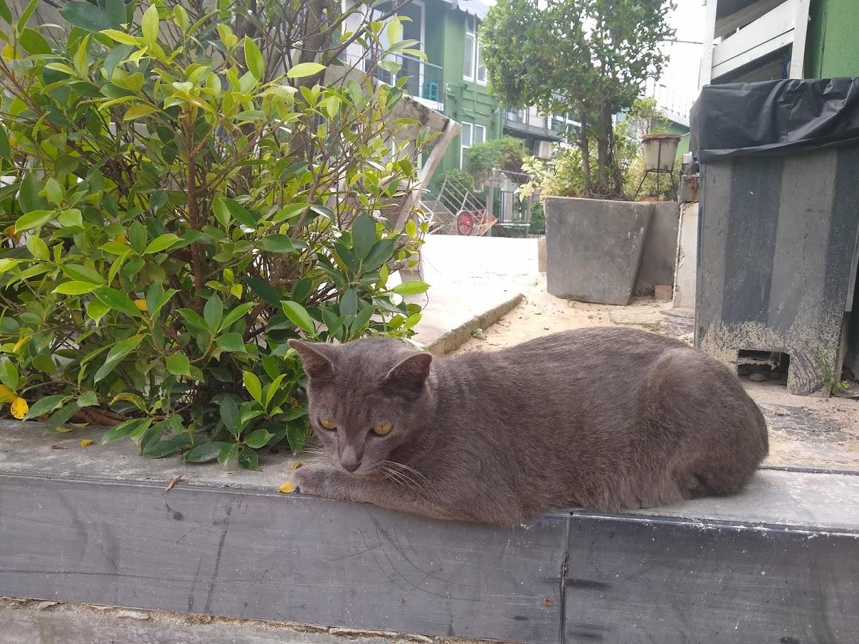 Cat in Koh Phi Phi